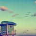 life guard hut birds sm by pdulis