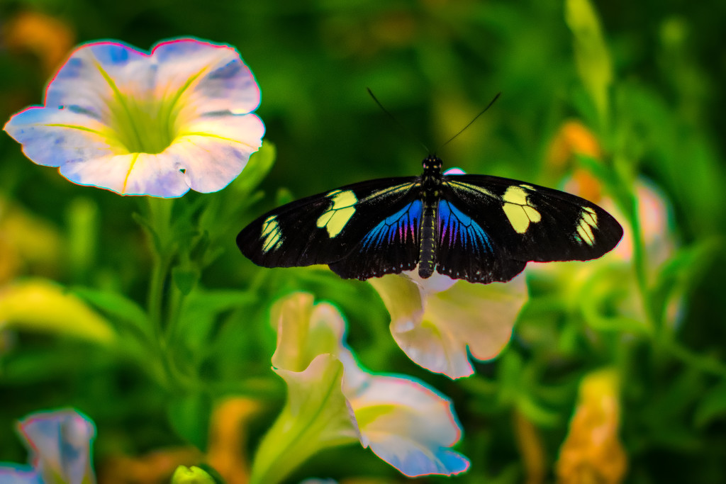 Bright Elusive Butterfly by stray_shooter