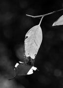 4th Apr 2018 - A Bit Of Black And White Bokeh_DSC5906