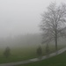 Foggy afternoon by mittens
