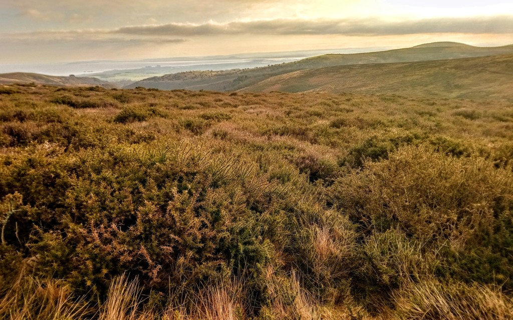 Heather and Hinckley Point by boxplayer