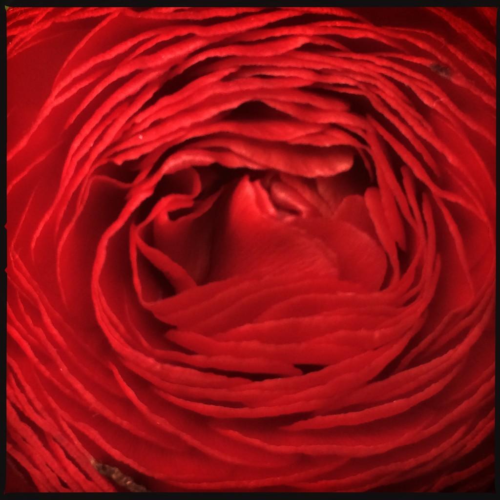 Ernst Haas by mastermek
