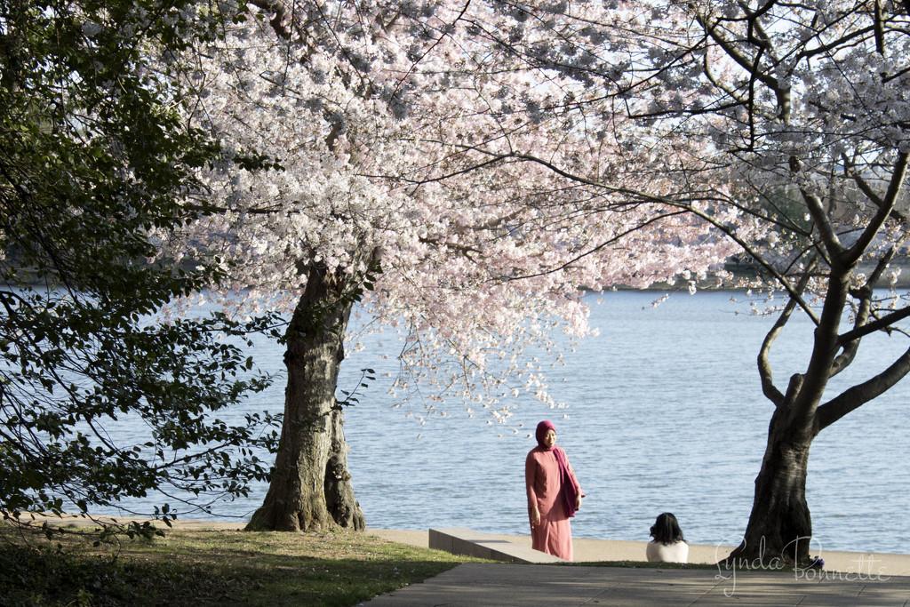 """Say, Cherry Blossom"" 3 by lynbonn"