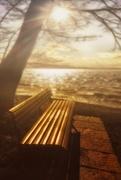5th Apr 2018 - 2018-04-05 sunshine bench under big tree