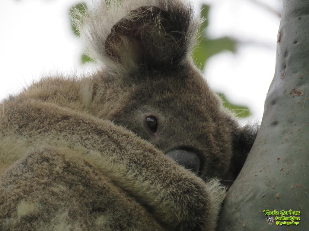 barely noticed by koalagardens