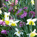 Hellebores and Daffodils  by snowy