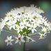 White flower by dkbarnett