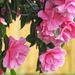 Pink by craftymeg
