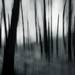 darkwood by northy