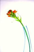 7th Apr 2018 - The Blue Vase