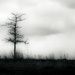 lone tree by northy