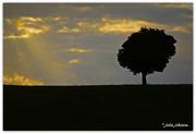 8th Apr 2018 - God Beams on The Karaka Tree