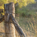 Fence Post by nicolecampbell