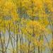 Lake Johnson autumn colours