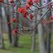 Springing by loweygrace