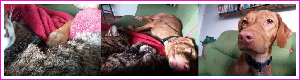at home by quietpurplehaze