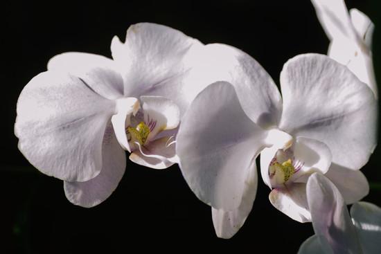 Haas flora by jackies365