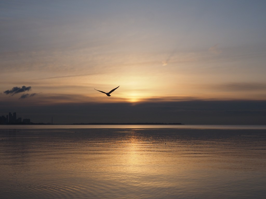Serenity by selkie
