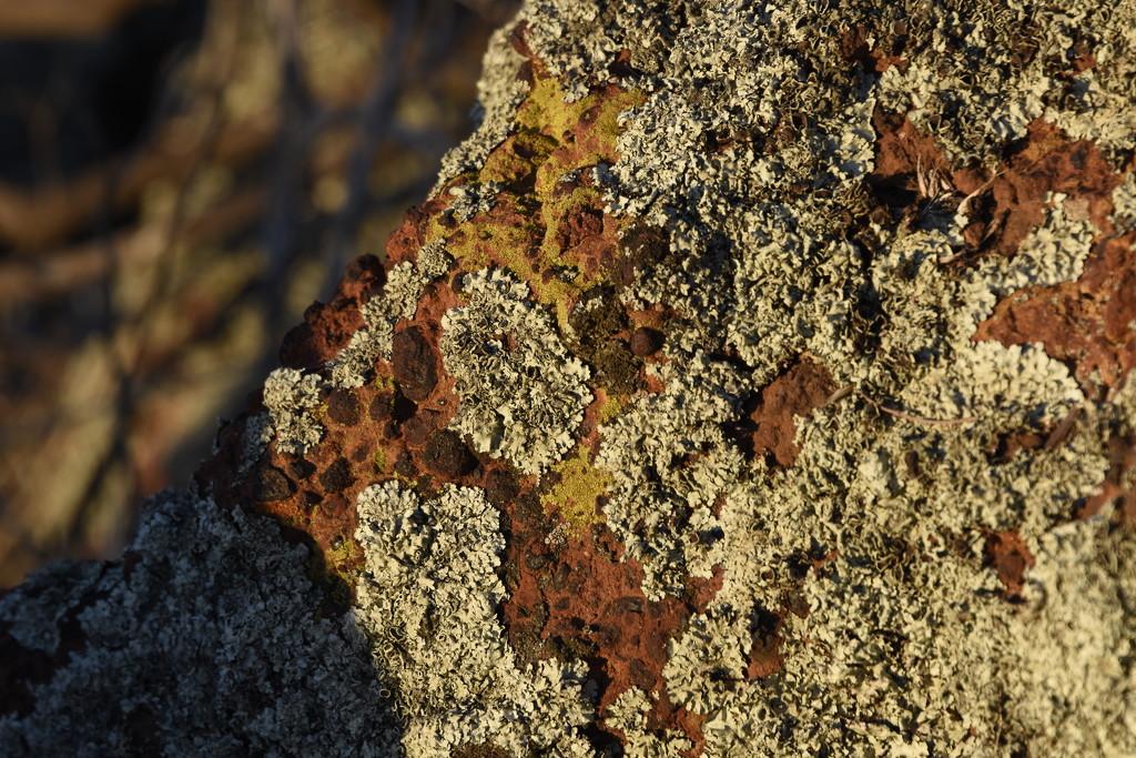 Lichen In The Sunshine_DSC6191 by merrelyn