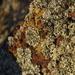 Lichen In The Sunshine_DSC6191