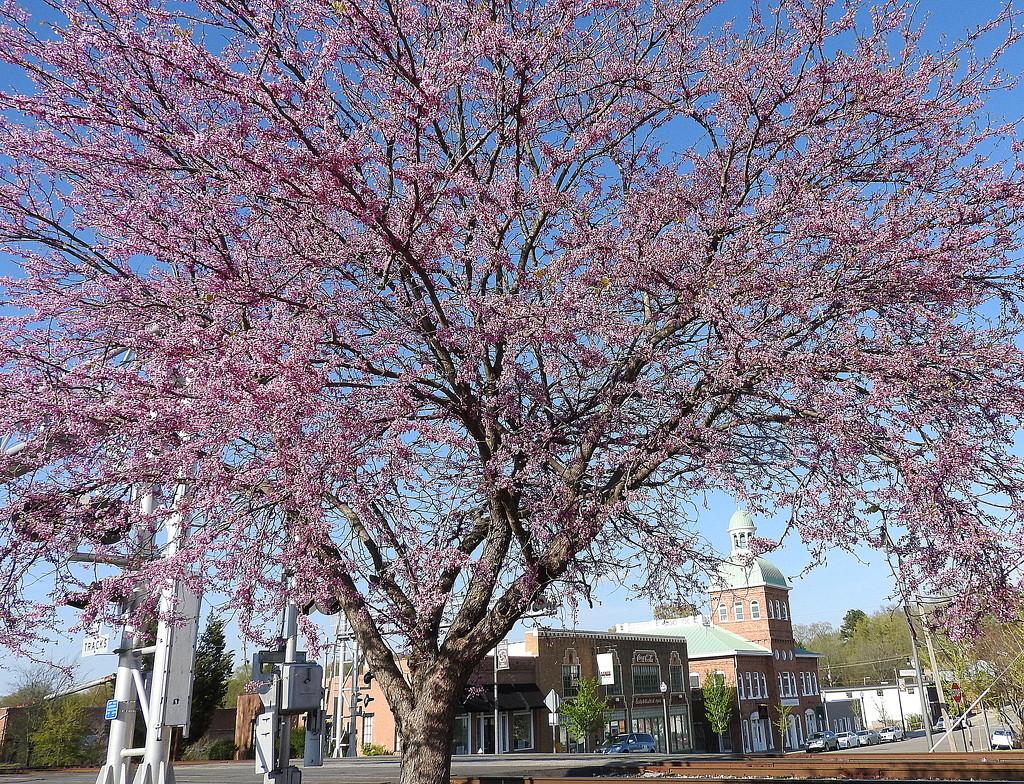 Spring in Sanford, NC by homeschoolmom