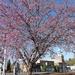 Spring in Sanford, NC