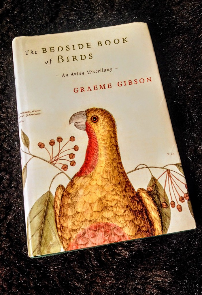 The Bedside Book of Birds by boxplayer