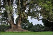 9th Apr 2018 - Wedding Tree