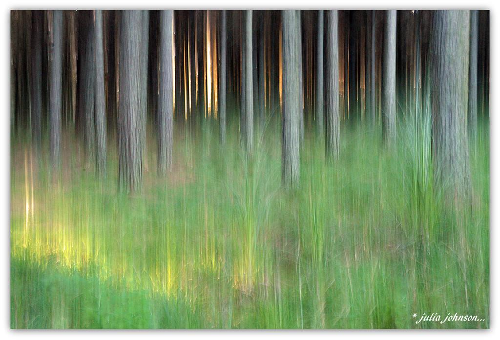 Golden light .... by julzmaioro