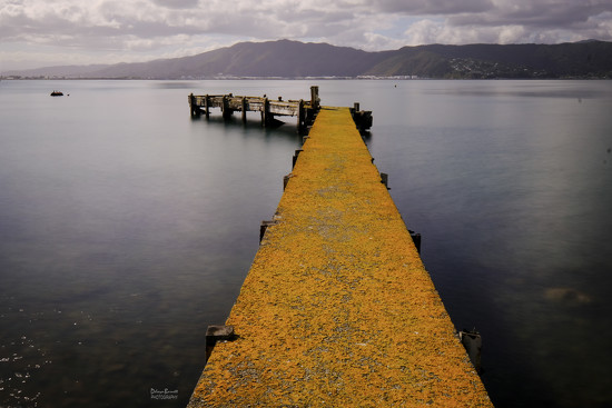 Yellow lichen on a pier by dkbarnett