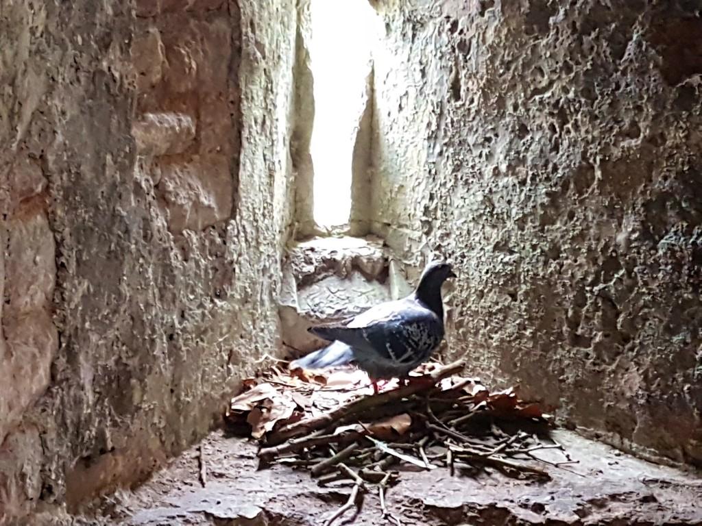 Oratory nest by julienne1