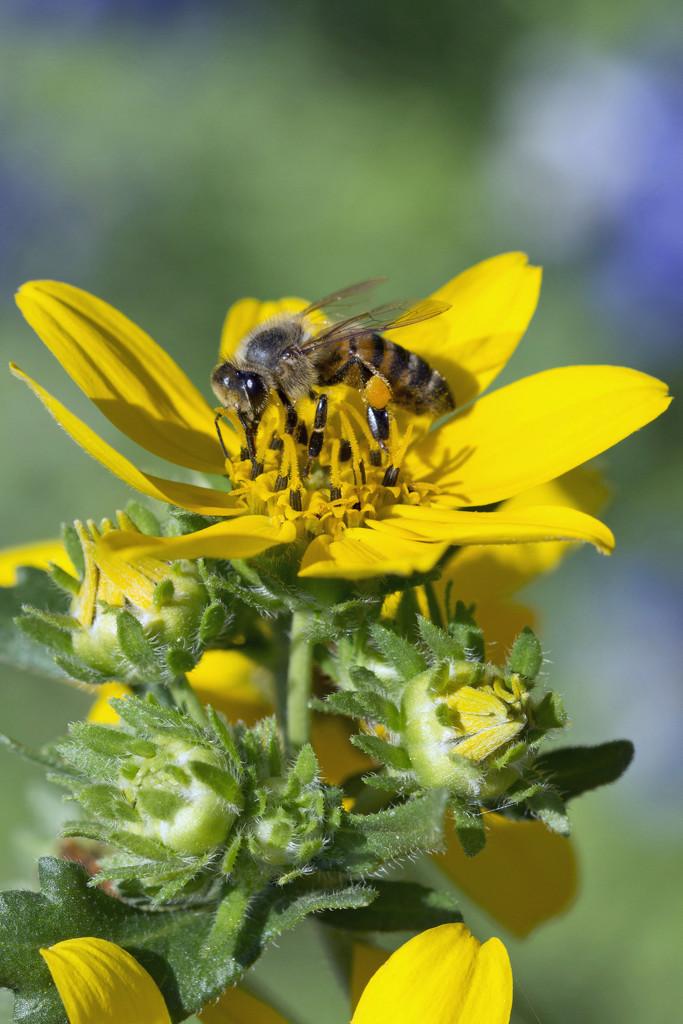 Buds, Bloom and Bee by gaylewood