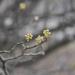 Springing 4