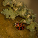 Lichen and Lady Bug!