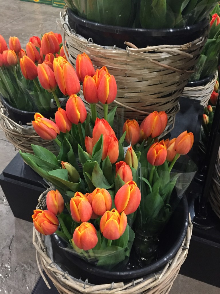 Bunches of tulips by kchuk