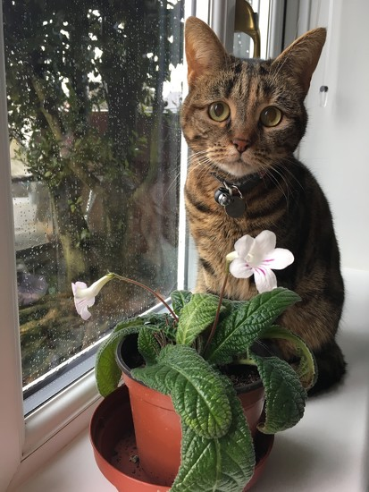 Molly and the streptocarpus by 365projectmaxine