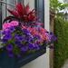 Flower box, historic district, Charleston, SC
