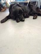 14th Apr 2018 - Ludo, the studio dog at Paperwild