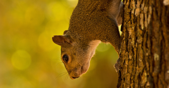 Squirrel Hanging Down! by rickster549