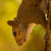 Squirrel Hanging Down!