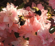 15th Apr 2018 - The Spot to Bee!