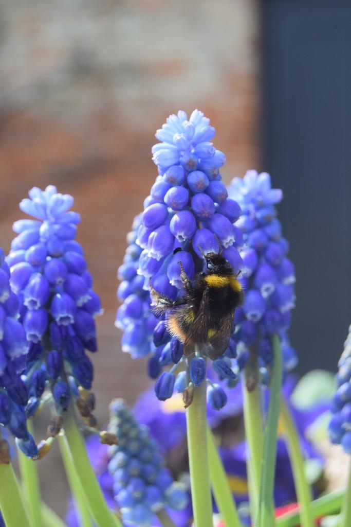 99. Buzz buzz by dragey74