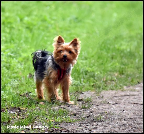 Little dog by rosiekind