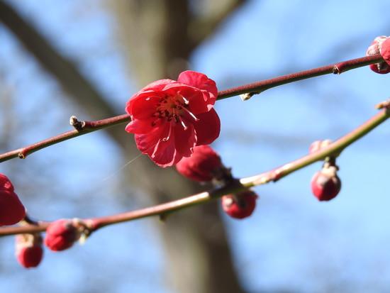 Peach Blossom  by susiemc