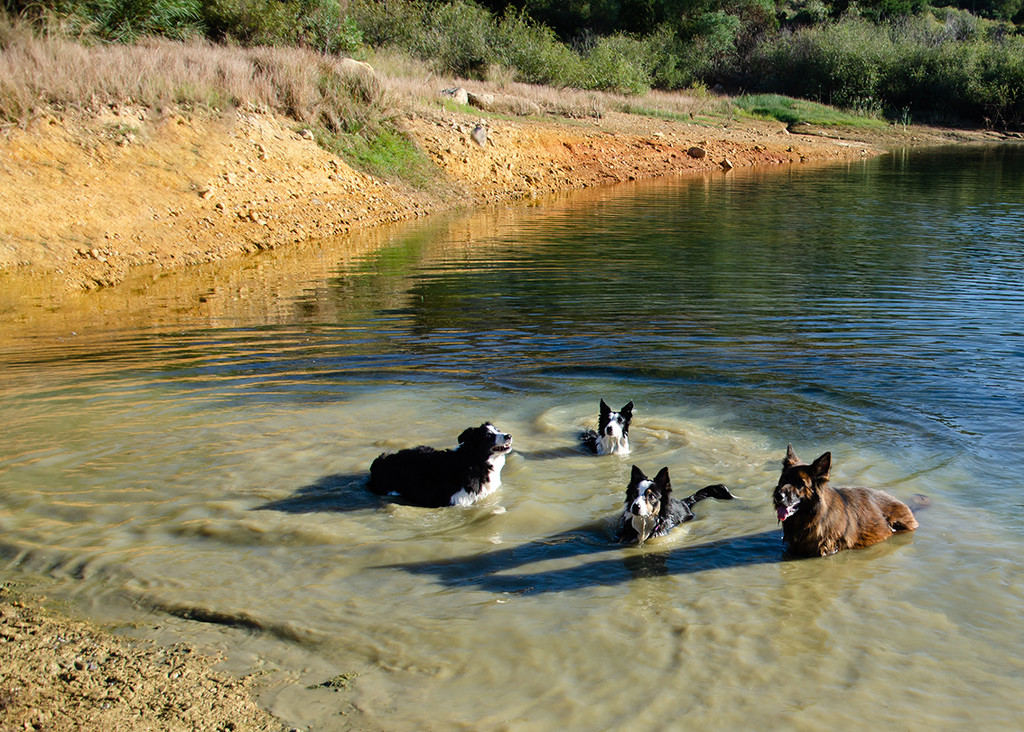 Swimming Dogs by salza
