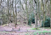 15th Apr 2018 - Ercall Woods