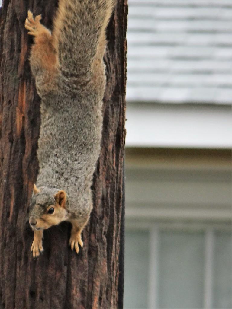Squirrel Yoga by brillomick