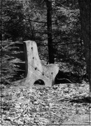 16th Apr 2018 - A Bench in the Woods