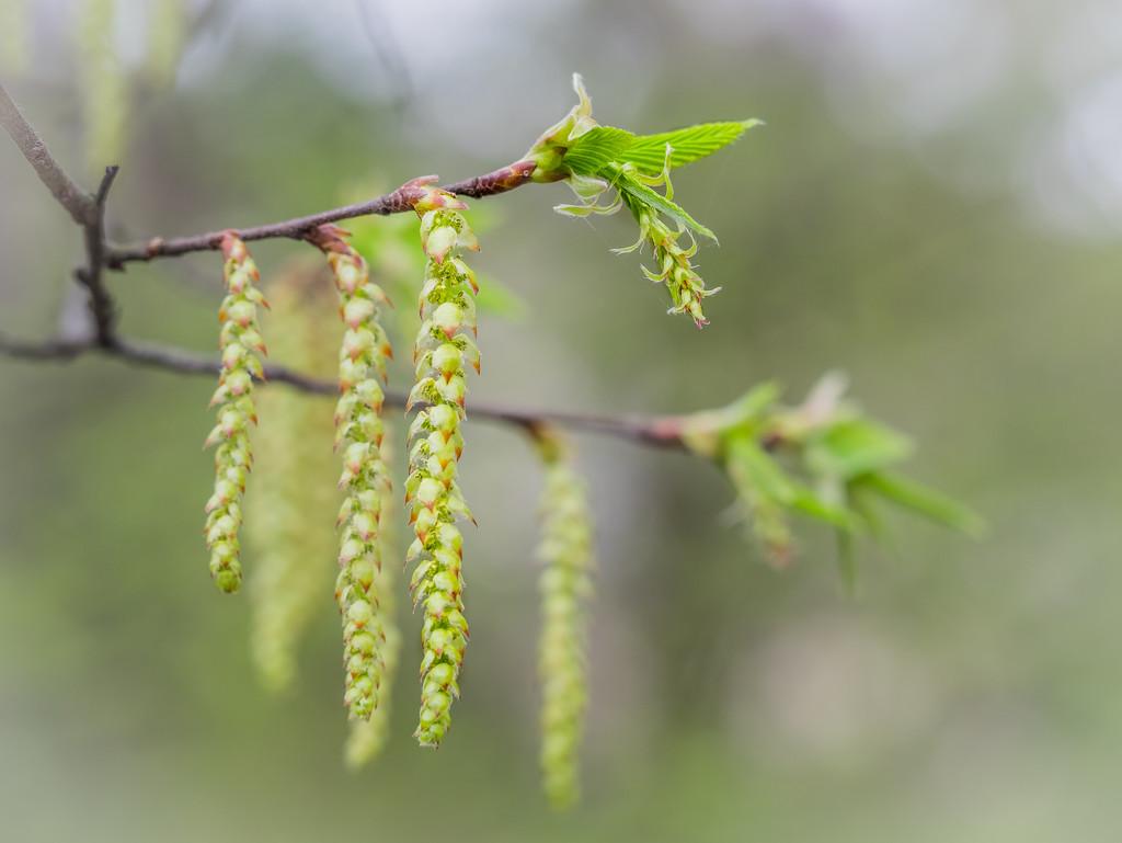 Sings of spring by haskar