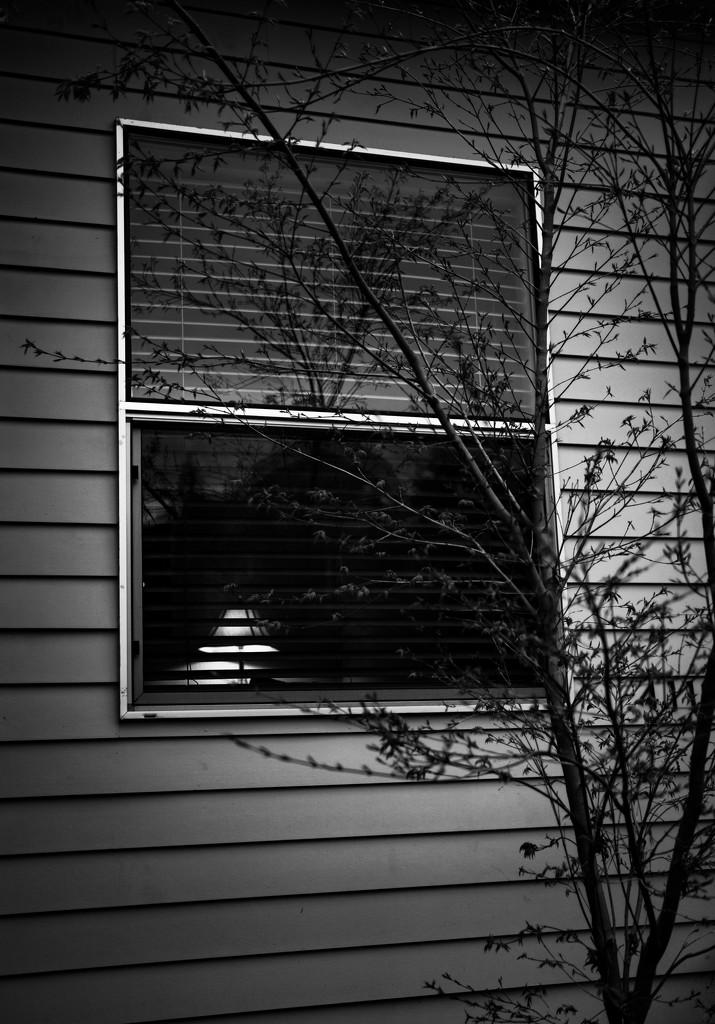 Evening lamplight by cristinaledesma33